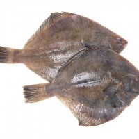 New Zealand Flounder